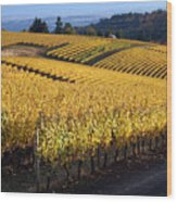 Bella Vida Vineyard 3 Wood Print