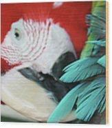 belle Ara Macao oiseaux tropicaux de Maui  Wood Print