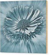 Bellis In Cyan  #flower #flowers Wood Print