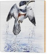 Belted Kingfisher Wood Print by Christopher Cox