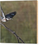 Belted Kingfisher Liftoff Wood Print