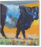 Belted Galloway Cow Side View Wood Print
