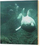 Beluga Whale 2 Wood Print