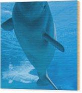 Beluga Whale In A Marine Park, Ontario Wood Print