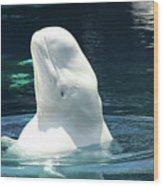 Beluga Whale Wood Print