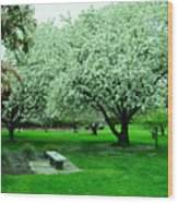 Bench Among.the Blossoms Wood Print