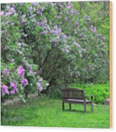 Bench In Lillacs Wood Print