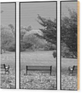 Bench View Triptic Wood Print