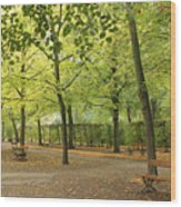 Benches In Wurzburg Wood Print