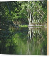 Bend Of The Ocklawaha River Wood Print