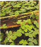 Beneath The Redwoods Wood Print
