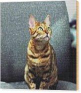 Bengal Cat Oil Pastel  Wood Print