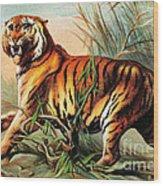 Bengal Tiger, Endangered Species Wood Print