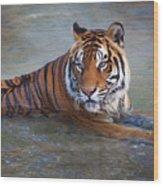 Bengal Tiger Laying Water Wood Print