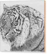 Bengal Tiger Wood Print