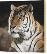 Bengal Tiger Sitting In Silent Shadows Wood Print
