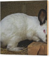 Benny Bunny Wood Print
