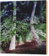 Bent Fir Tree Wood Print