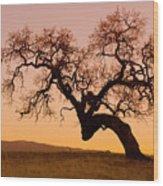 Bent Oak Wood Print