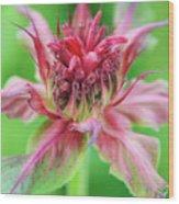 Bergamot Flower Wood Print