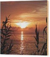 Bermuda Evening Wood Print