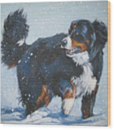 Bernese Mountain Dog In Drift Wood Print