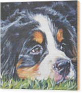Bernese Mountain Dog In Grass Wood Print