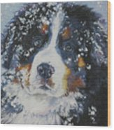 Bernese Mountain Dog Puppy Wood Print