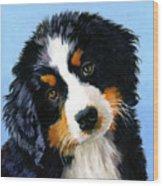 Bernese Mountain Puppy Wood Print
