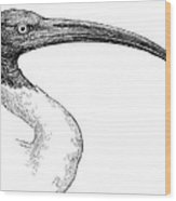 Berniers Ibis Wood Print