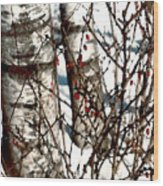 Berries And Birches Wood Print