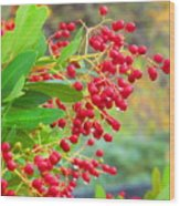 Berries Macro Wood Print