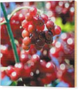 Berry Berry Red-1 Wood Print