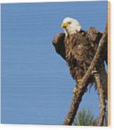 Berry Eagle Wood Print