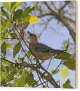 Berry Good Woodpecker Wood Print
