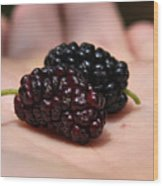 Berry Handy 2 Wood Print by Karen M Scovill