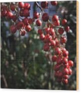 Berry Tree Wood Print