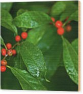 Berry's Wood Print
