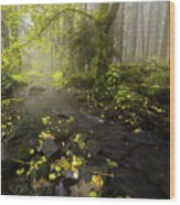 Beside The Stream Wood Print