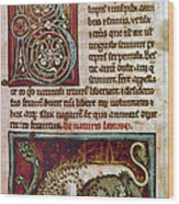 Bestiary: Lion Wood Print