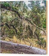 Bethany Cemetery Oaks And Tidal Creek Wood Print