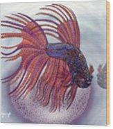 Betta Fish Wood Print
