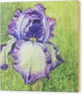 Betty's Iris Wood Print