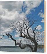 Between A Rock And A Wet Spot Wood Print