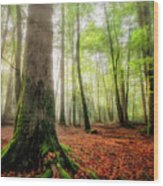 Between The Light And The Shadows Wood Print