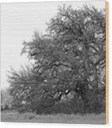 Between Two Trees Wood Print