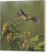 Bewick's Wren Wood Print