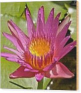 Beyond Beautiful Water Lily 3 Wood Print