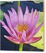 Beyond Beautiful Water Lily Wood Print