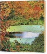 Beyond The Birch Pathway Wood Print